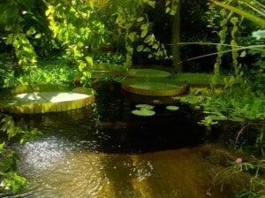 Yvonne Oslo-Boranischer-Garten